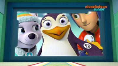 Les pingouins vid o paw patrol la pat 39 patrouille - Jeux de nick junior ...