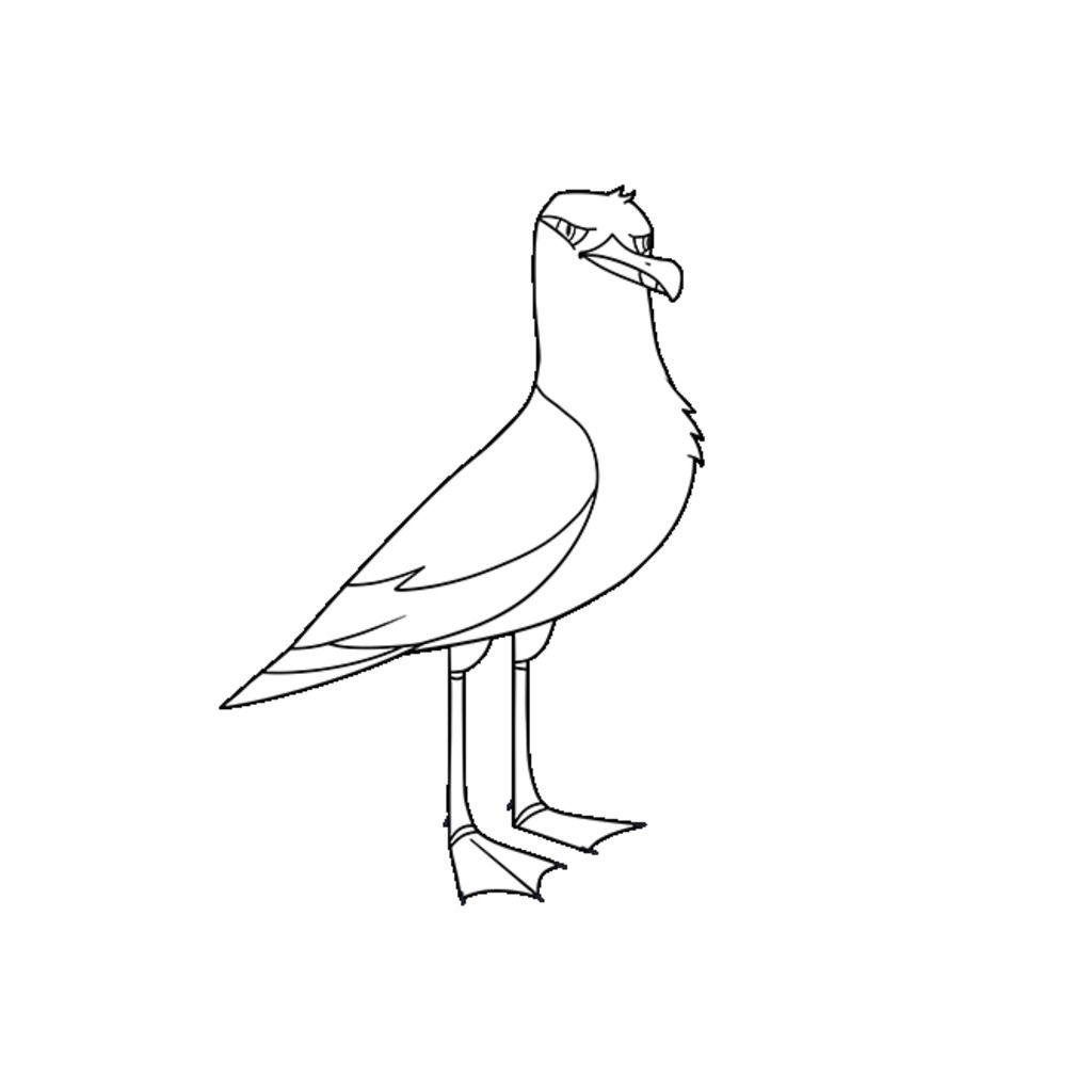 seagull coloring page contegri com